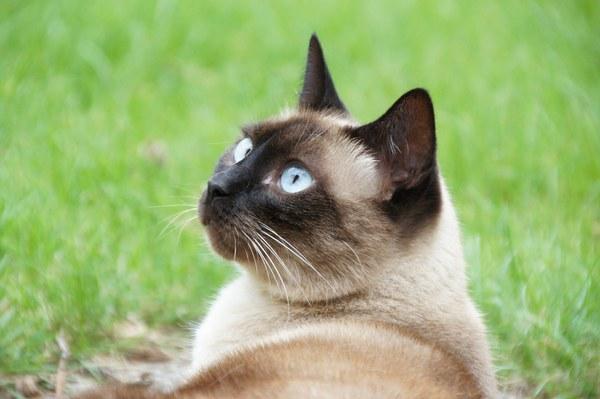cat 419091