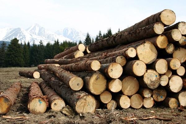 wood 1613940 1920